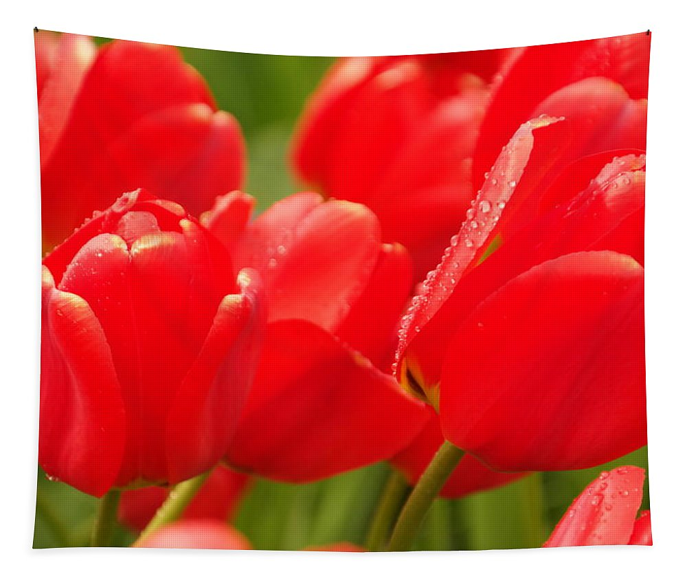 Tulips Tapestry featuring the photograph Wet Tulips by Jeff Swan