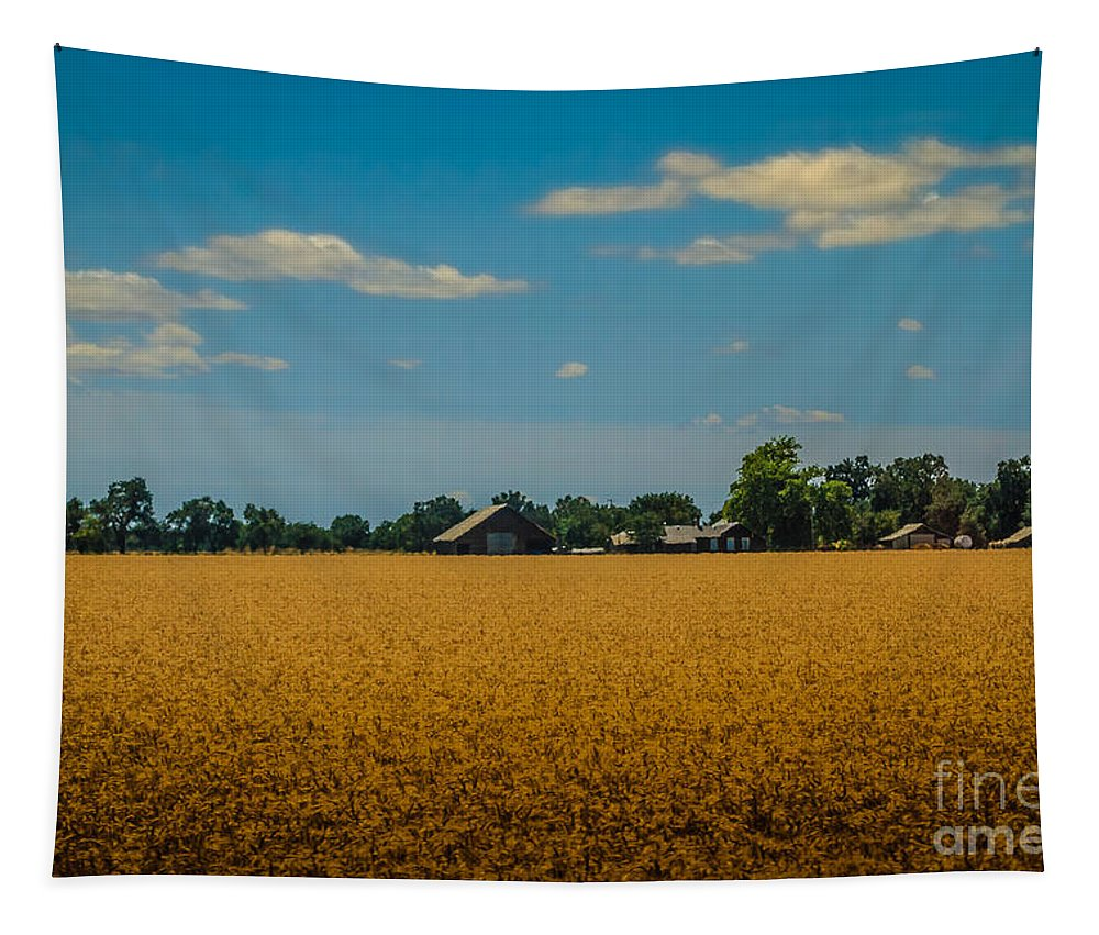 Wheat Field Tapestry featuring the photograph Wheat Field by Mitch Shindelbower