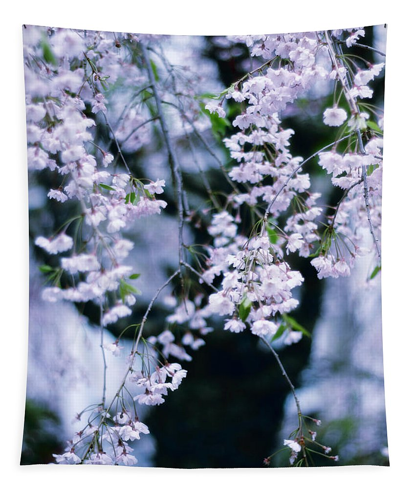 Tree Tapestry featuring the photograph Weeping Cherry by Jessica Jenney