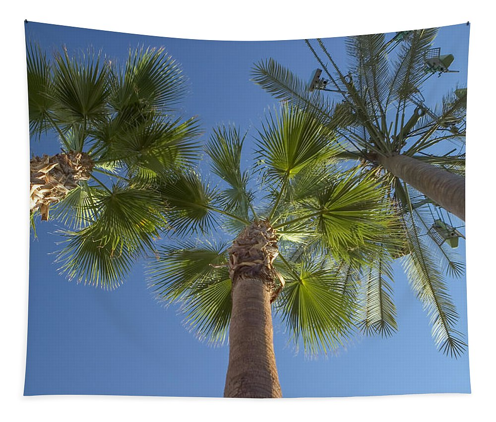 Palm Trees Tapestry featuring the photograph Which One Doesnt Belong 2 by Scott Campbell