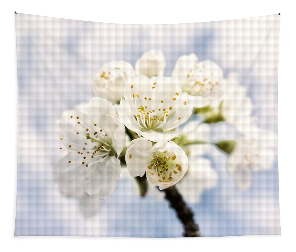 Apple Blossom Tapestry featuring the photograph White And Bright - Beautiful Blossoms by Matthias Hauser