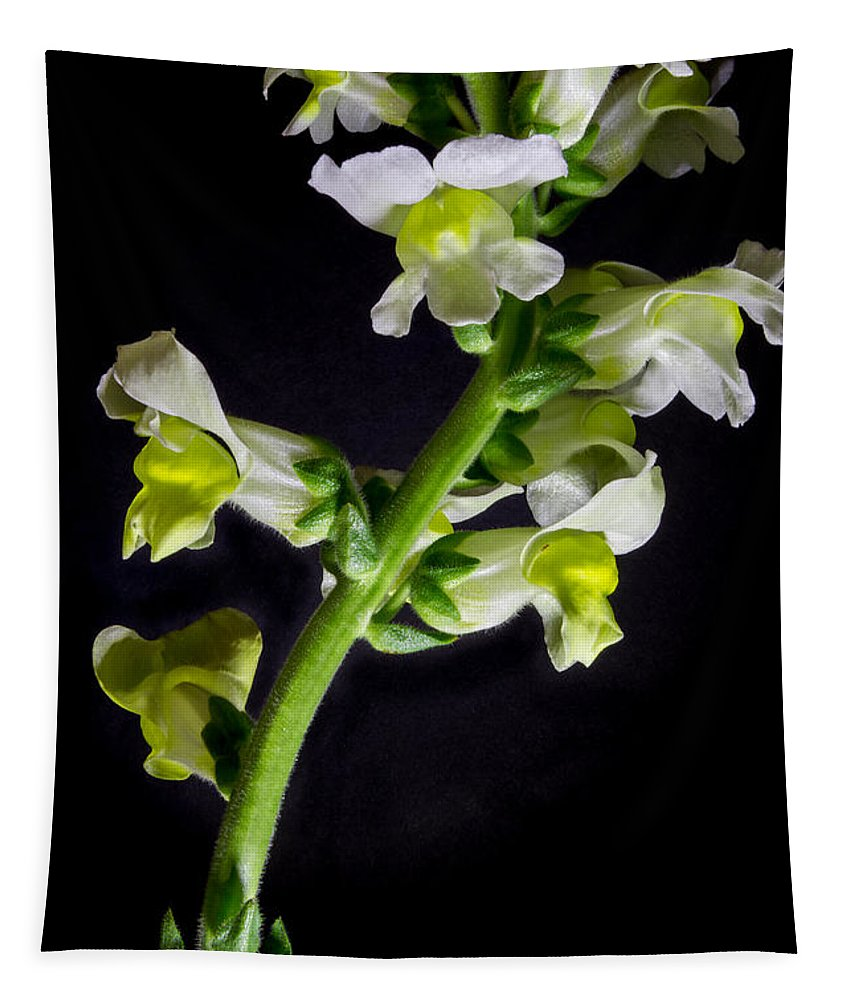 White And Yellow Snapdragon Tapestry featuring the photograph White And Yellow Snapdragons by Mitch Shindelbower