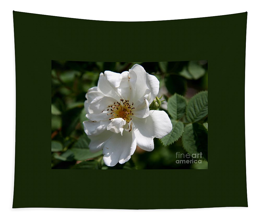 Rose Tapestry featuring the photograph White Dog Rose by Christiane Schulze Art And Photography