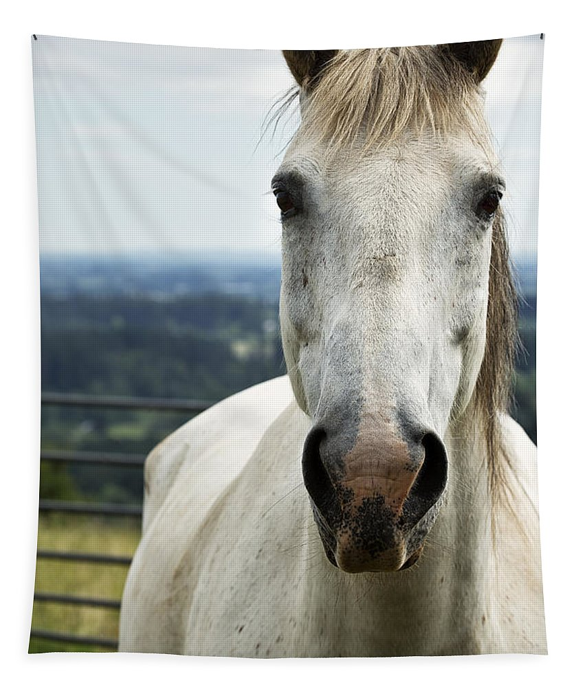 Horse Tapestry featuring the photograph White Horse by Belinda Greb