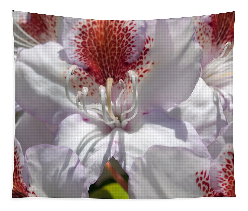 White Tapestry featuring the photograph White Rhododrendon by Tikvah's Hope