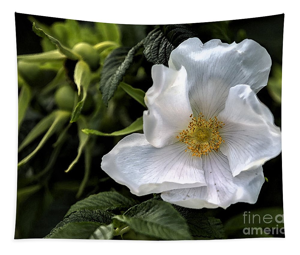 Rose Tapestry featuring the photograph White Rose by Belinda Greb