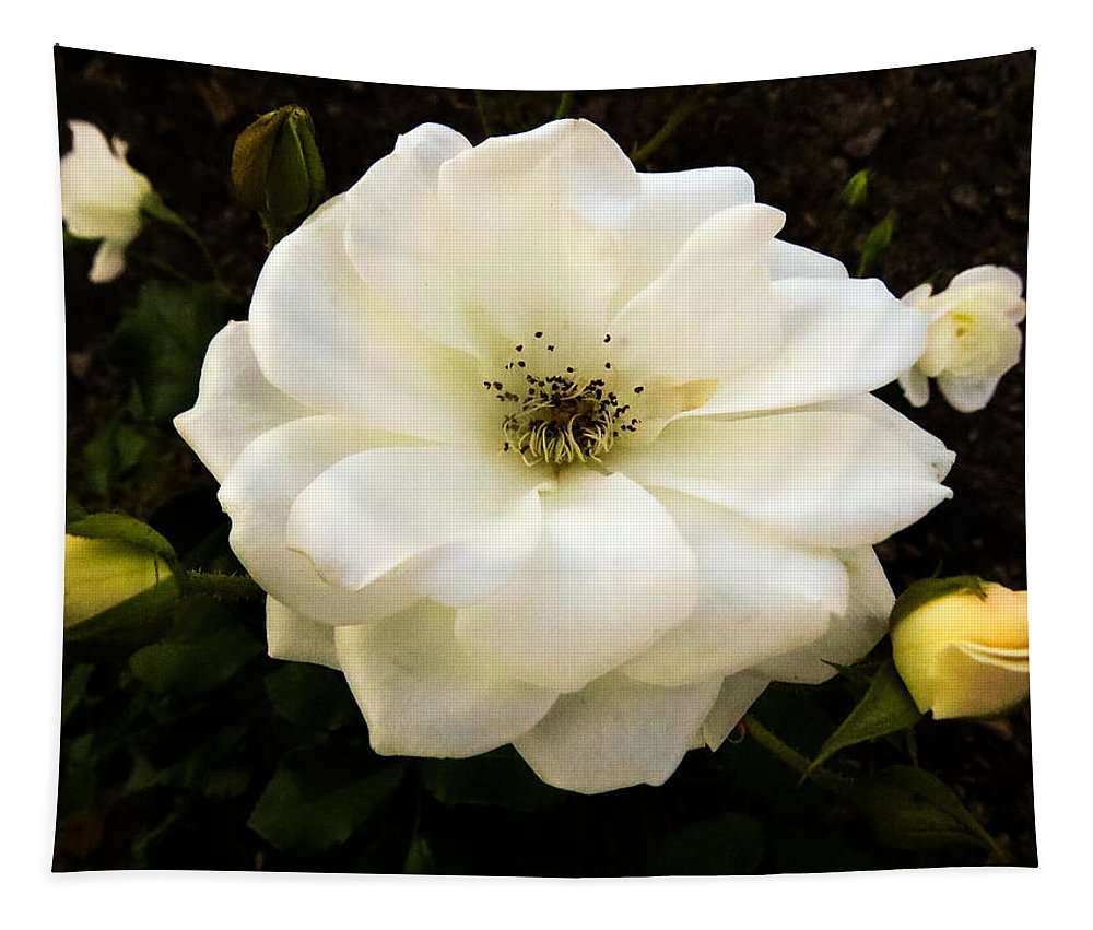 Rose Tapestry featuring the photograph White Rose With Buds by Zina Stromberg