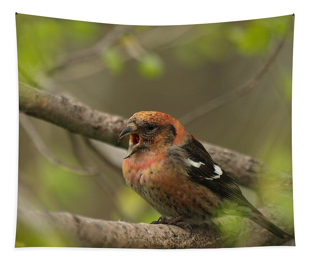 Peterson Nature Photography Tapestry featuring the photograph White-winged Crossbill by James Peterson