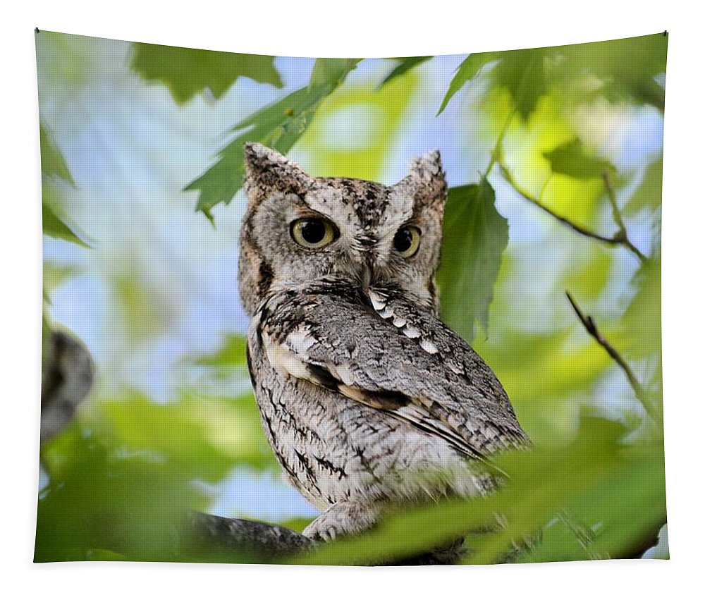 Owl Tapestry featuring the photograph Who Was That by Bonfire Photography