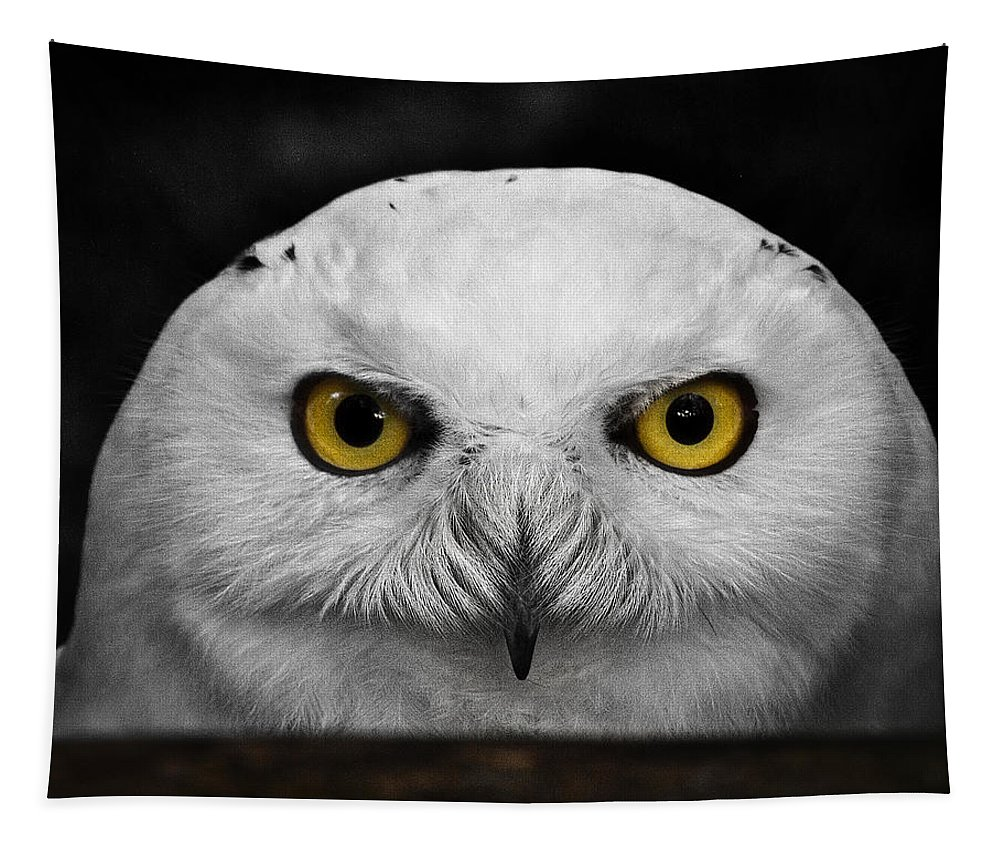 Whoooo's There? Tapestry featuring the photograph Whoooo's There? by Wes and Dotty Weber