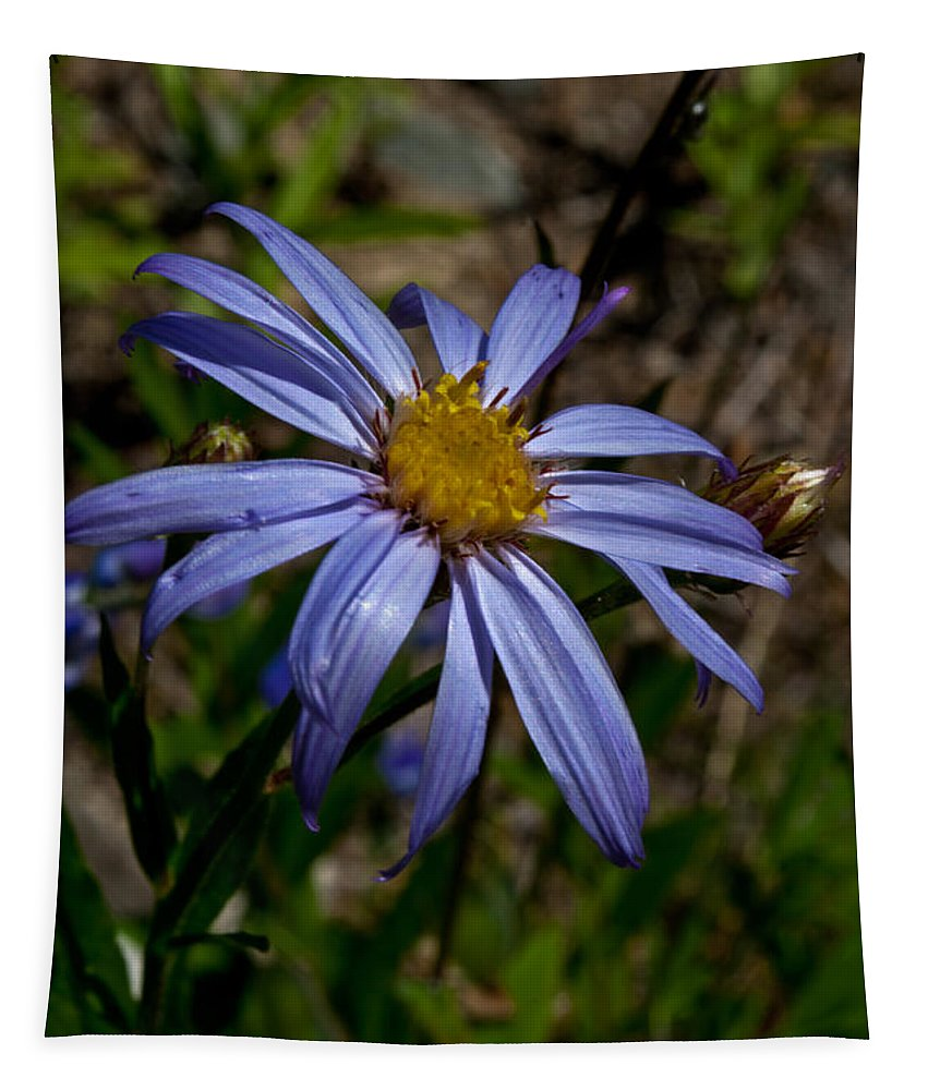 Flower Tapestry featuring the photograph Wild Aster Flower by Tikvah's Hope
