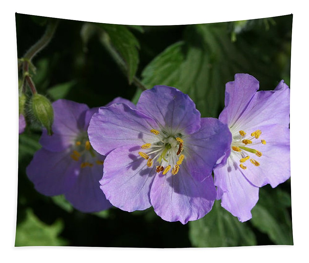 Wild Geraniums Tapestry featuring the photograph Wild Geraniums by Susan McMenamin