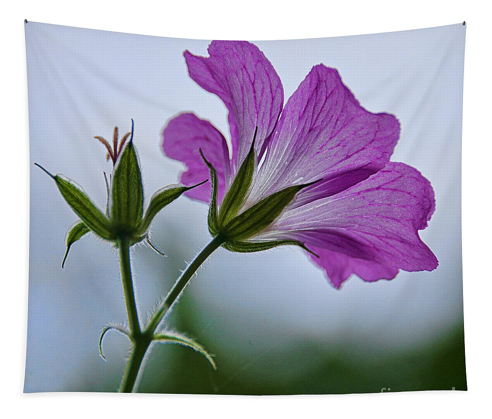 Geraniums Tapestry featuring the photograph Wild Geraniums by Susie Peek