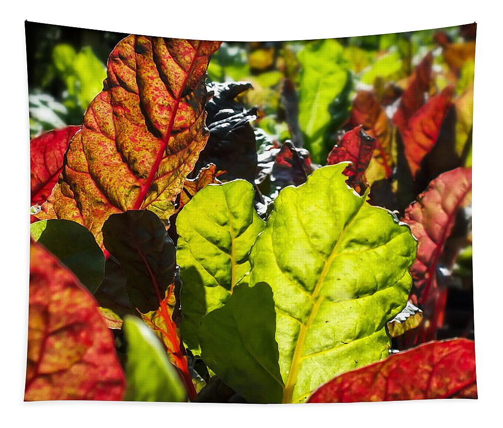 Wild Lettuce Tapestry featuring the photograph Wild Lettuce by Karen Wiles