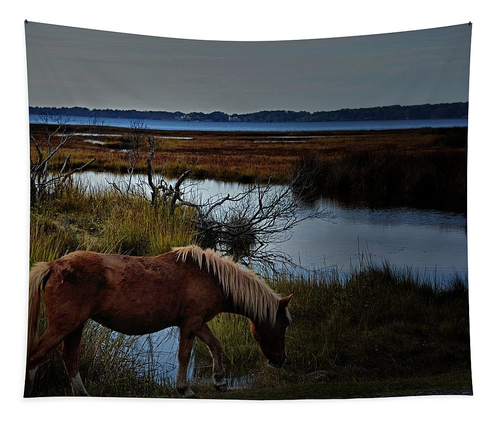 Horses Tapestry featuring the photograph Wild One by Robert McCubbin