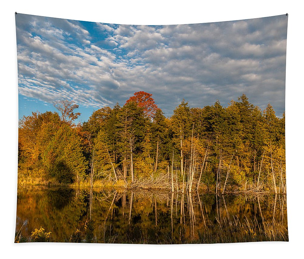 Steve Harrington Tapestry featuring the photograph Wilderness Pond 2 by Steve Harrington