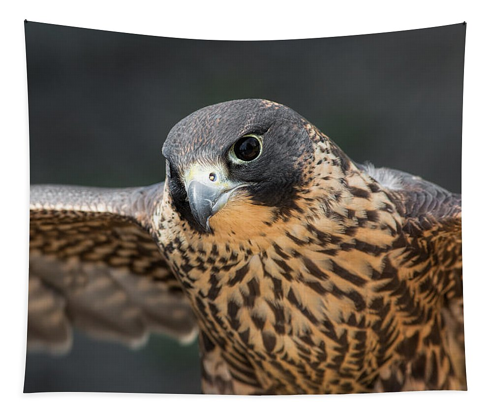 Peregrine Falcon Tapestry featuring the photograph Winged Portrait by Dale Kincaid