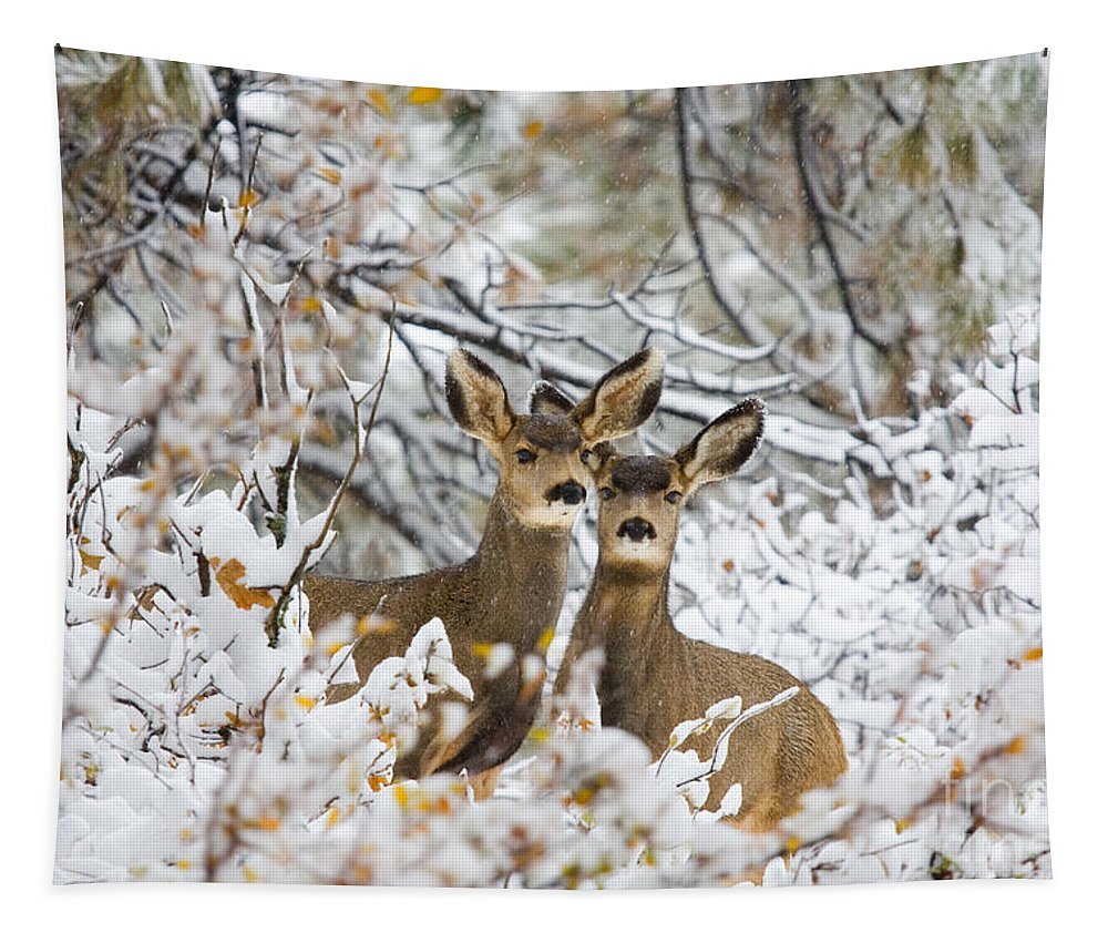Deer Tapestry featuring the photograph Winter Pair by Steve Krull