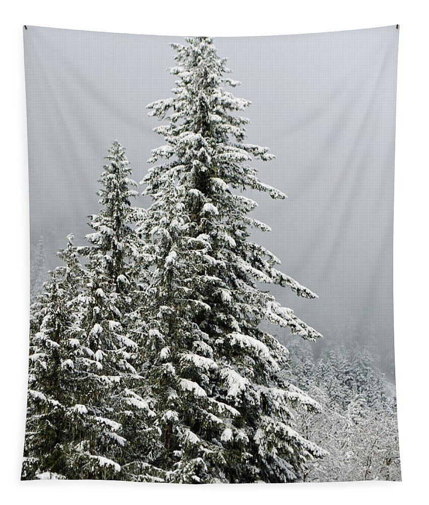 Clouds Tapestry featuring the photograph Winter Pines 2013 by Tikvah's Hope