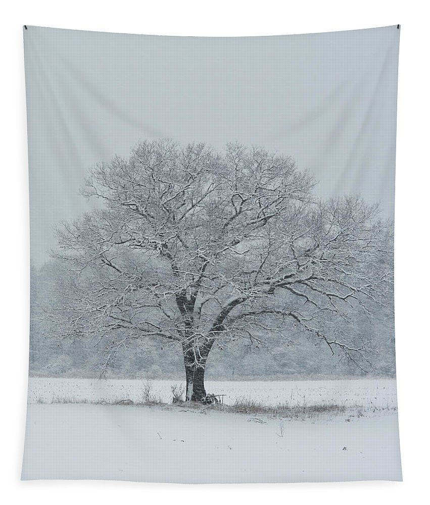 Tree Tapestry featuring the photograph Winter Tree Ipswich Ma by Toby McGuire