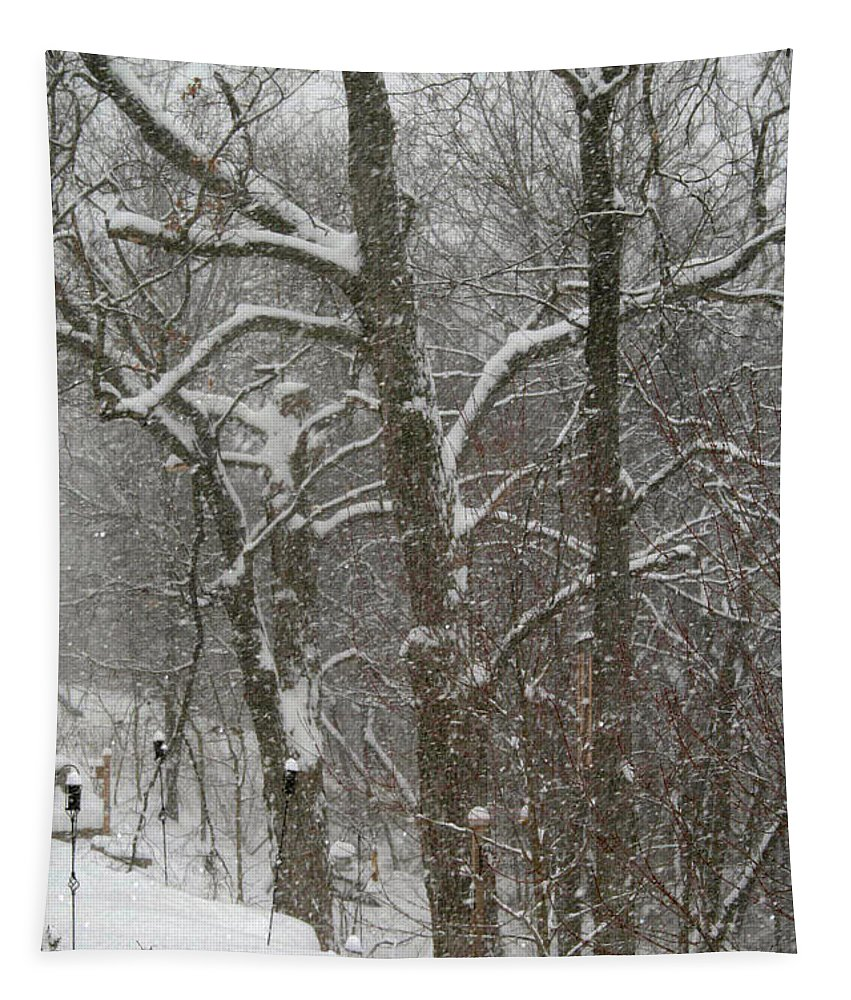 Winter Tapestry featuring the photograph Winter Trees by Karen Adams