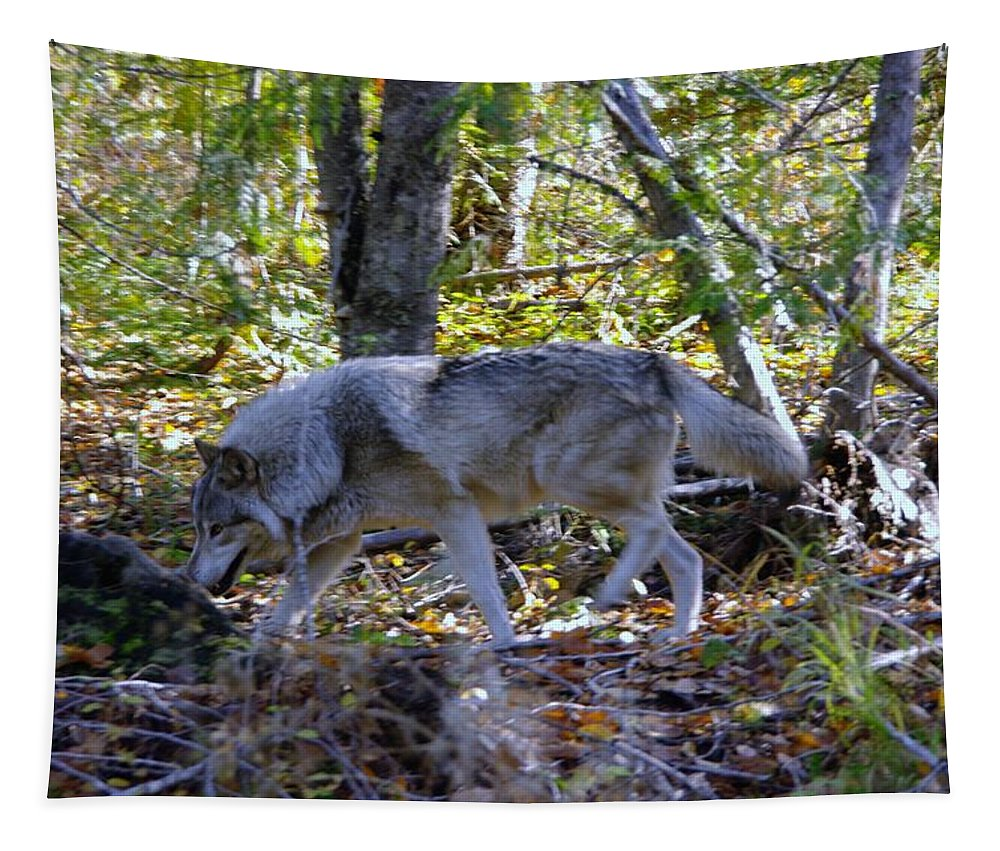 Wolf Tapestry featuring the photograph Wolf In The Woods by Jeff Swan