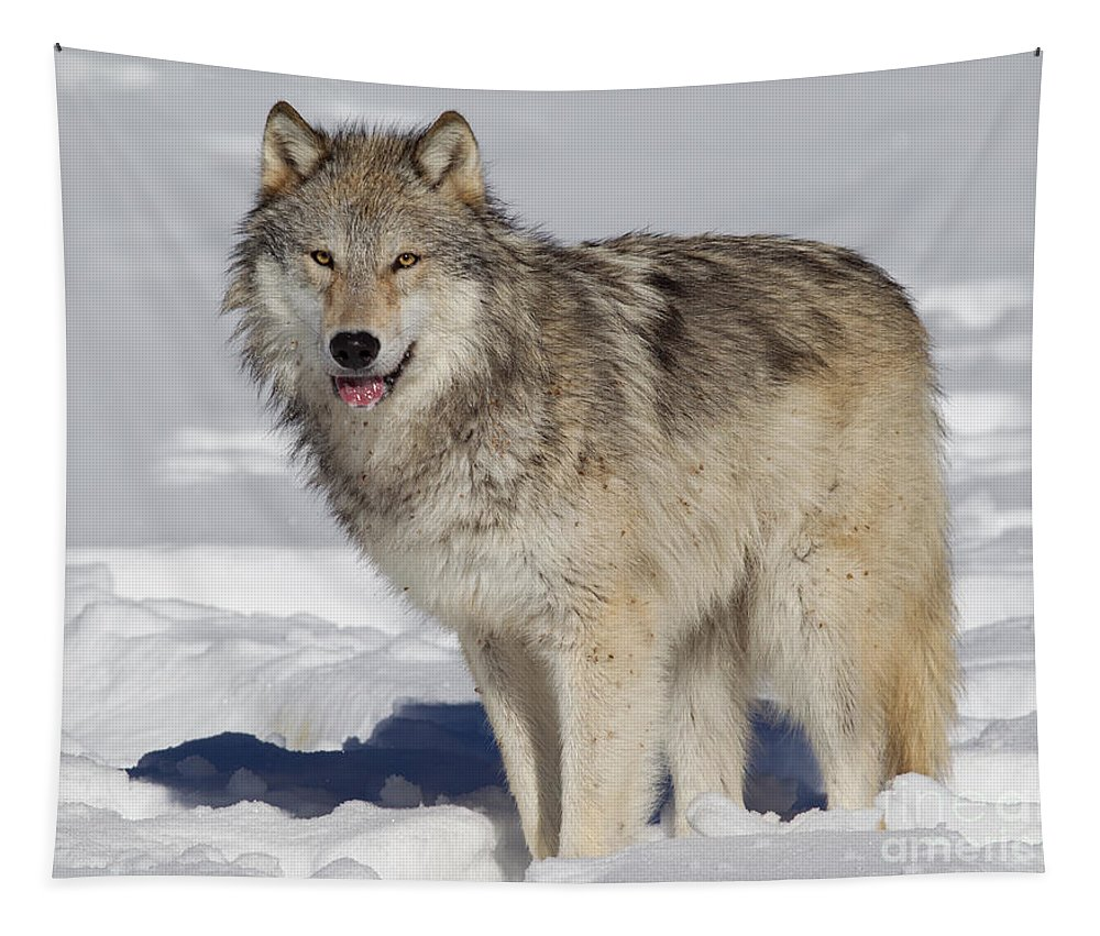 Mammal Tapestry featuring the photograph Wolf In Snow by Jerry Fornarotto
