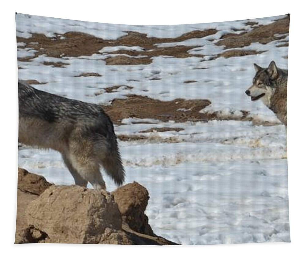 Wolf Tapestry featuring the photograph Wolf Pair by Paulina Roybal