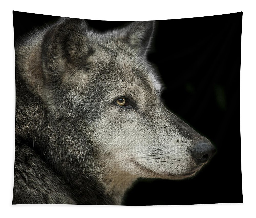 Wolf Tapestry featuring the photograph Wolf by Paul Neville