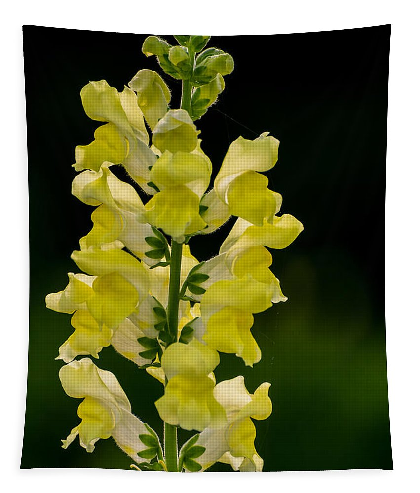 Snapdragon Tapestry featuring the photograph Yellow Beauty by Zina Stromberg