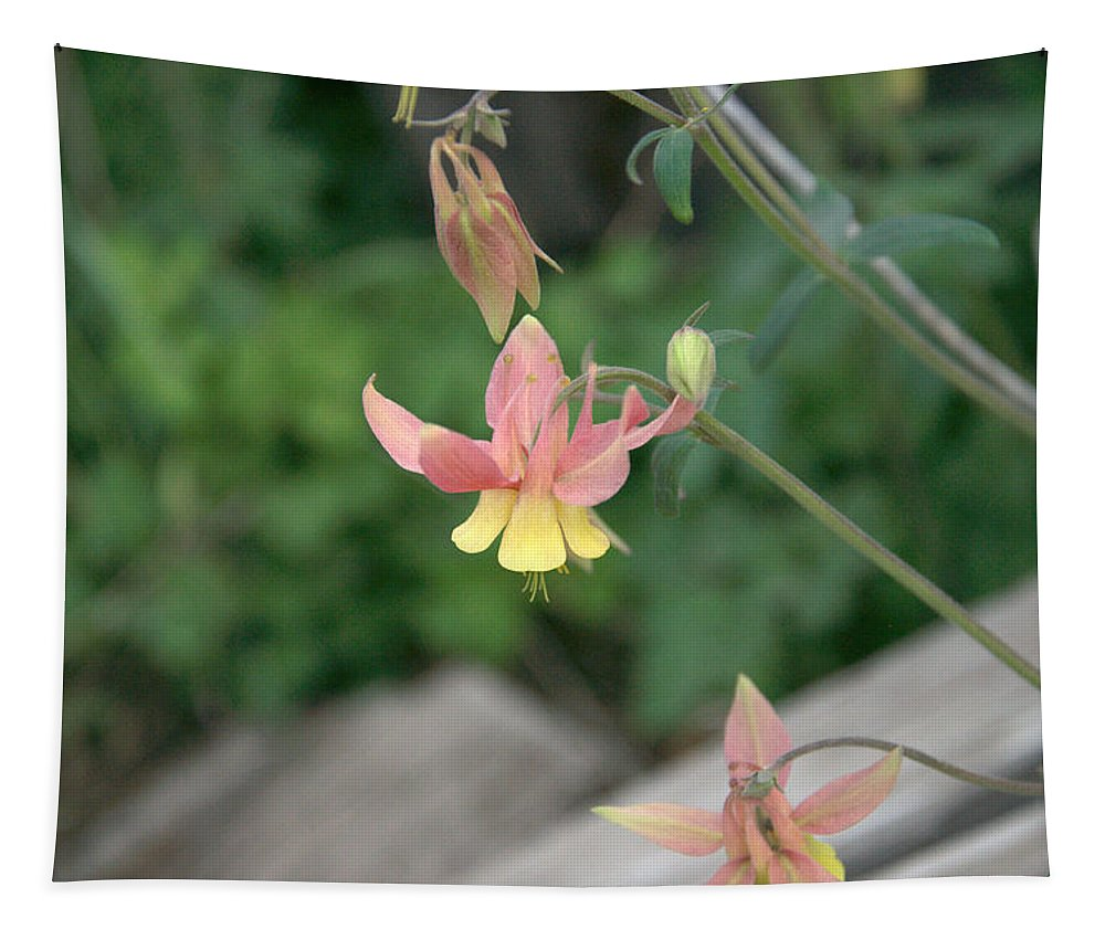 Yellow Tapestry featuring the photograph Yellow Columbine 2 by Frank Madia