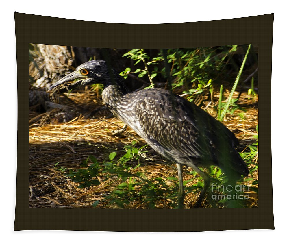 Yellow-crowned Night Heron Tapestry featuring the photograph Yellow-crowned Night Heron Eating A Fiddler Crab Dinner by Dale Powell