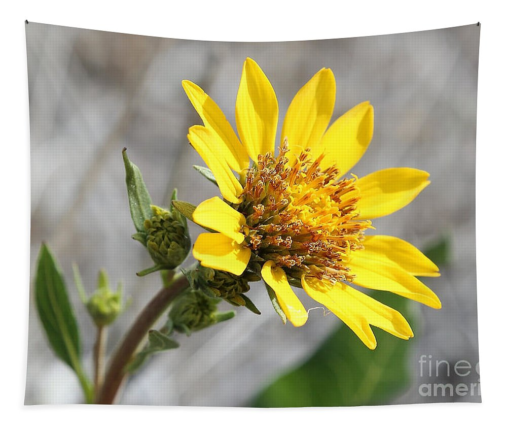 Yellow Flower Tapestry featuring the photograph Yellow Flower - Carey's Balsamroot by Carol Groenen