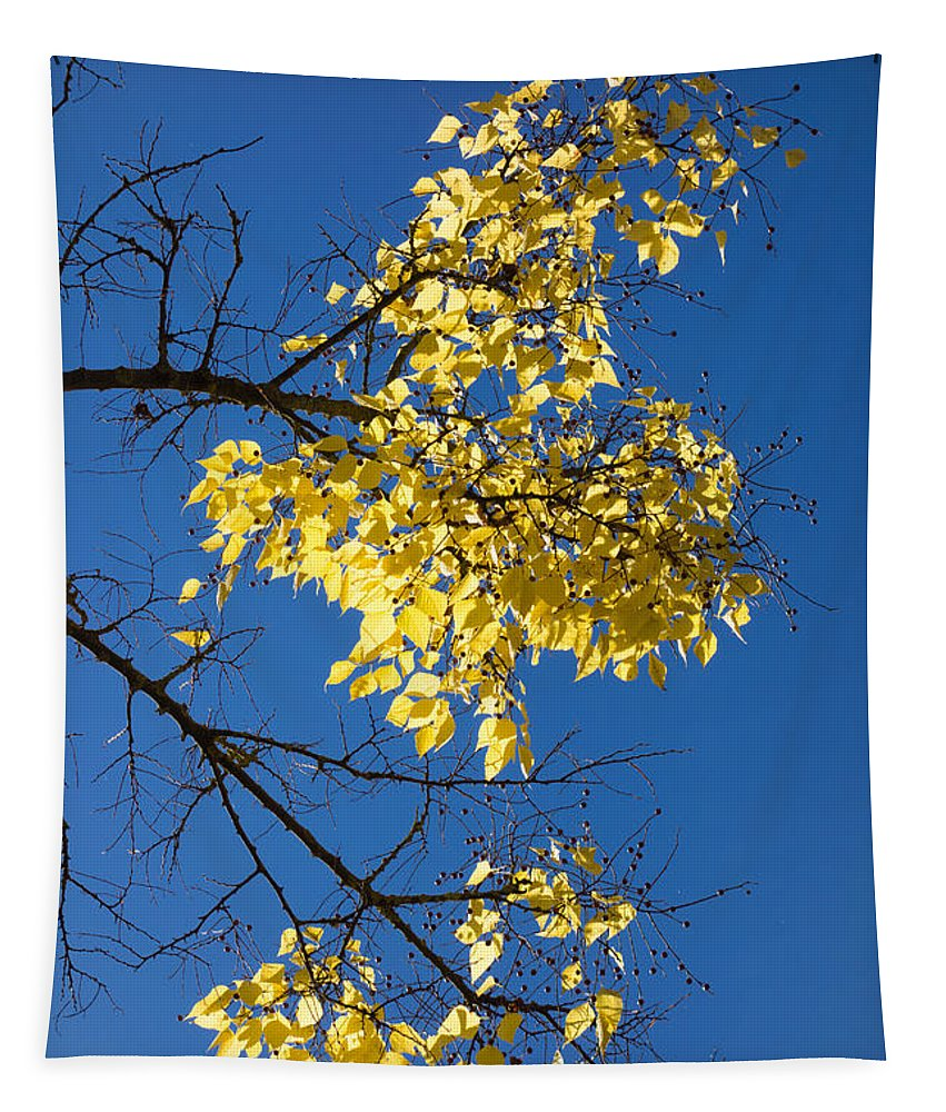 Leaves Tapestry featuring the photograph Yellow Leaves In Fall And Deep Blue Sky by Matthias Hauser