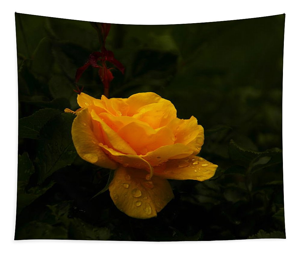 Yellow Tapestry featuring the photograph Yellow Rose Dapples With Waterdfrops by Jeff Swan