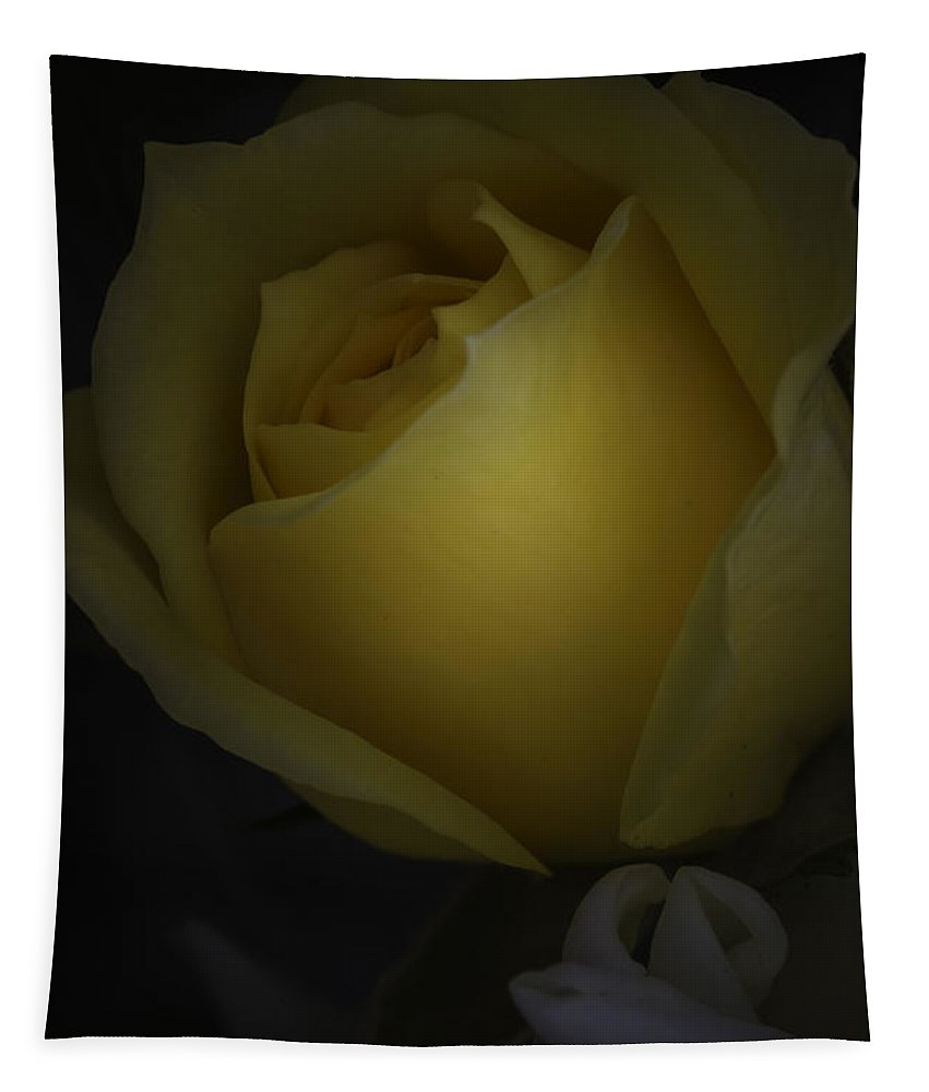 Yellow Rose Tapestry featuring the photograph Yellow Rose by Mitch Shindelbower