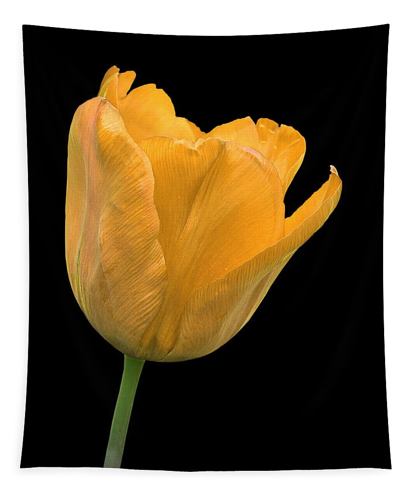 Yellow Flower Tapestry featuring the photograph Yellow Tulip Open On Black by Gill Billington