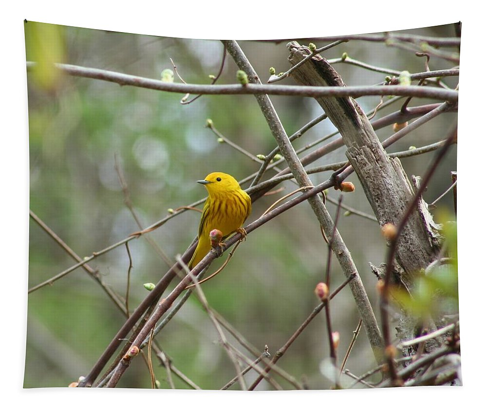 Spring Tapestry featuring the photograph Yellow Warbler by Karen Silvestri