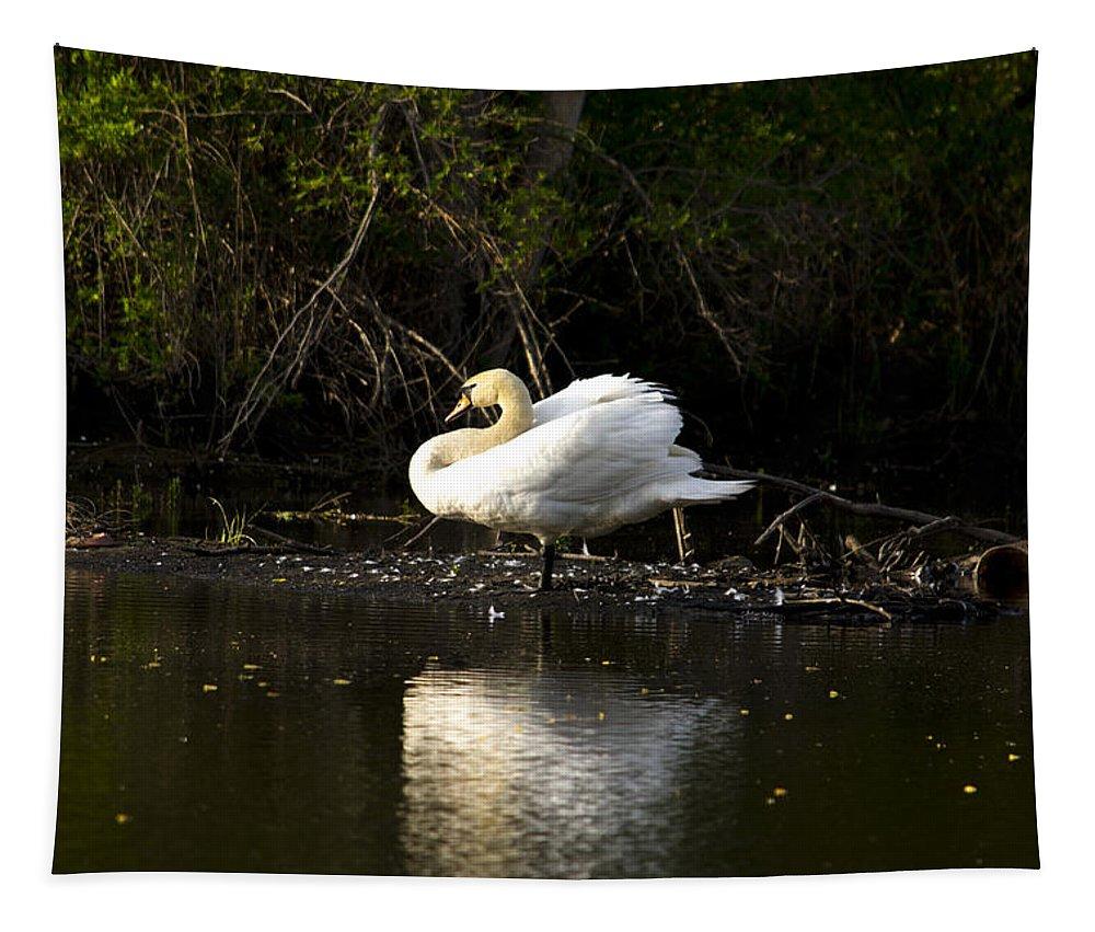 Swan Tapestry featuring the photograph Yogi Swan by Jatinkumar Thakkar
