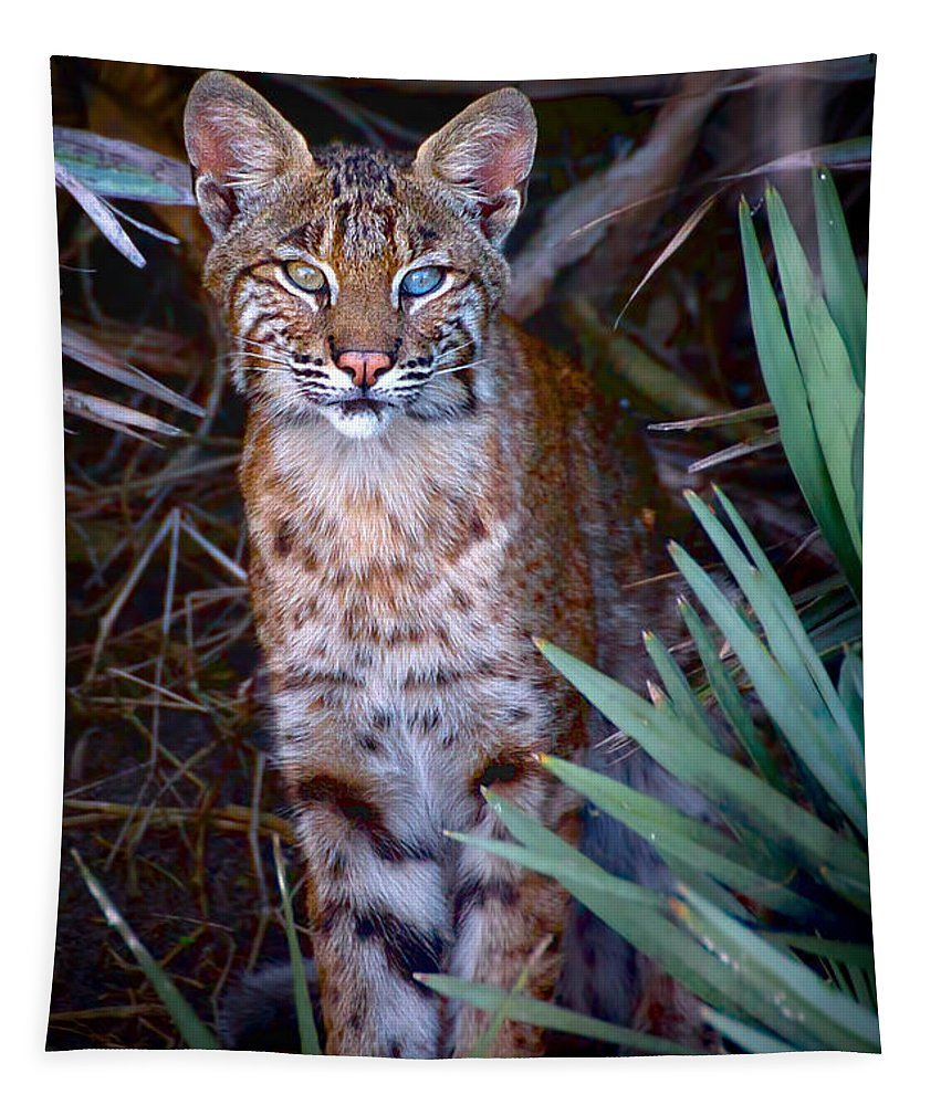 Bobcat Tapestry featuring the photograph Young Bobcat by Mark Andrew Thomas