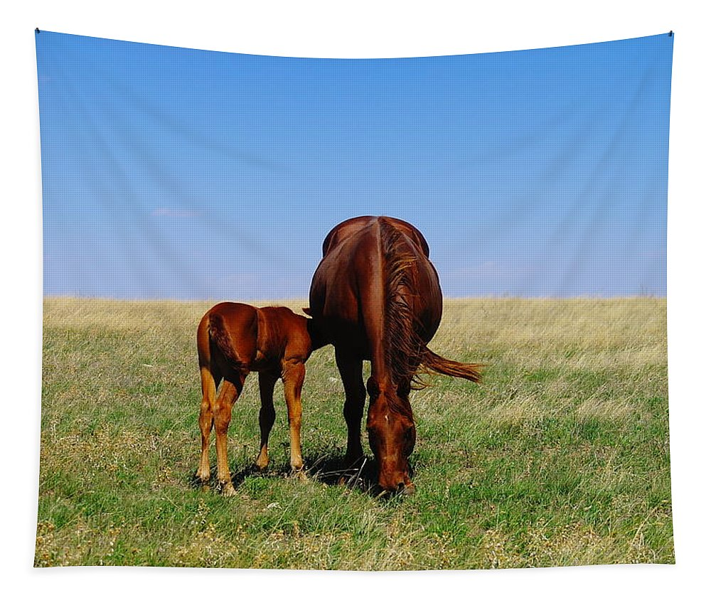 Horses Tapestry featuring the photograph Young Colt And Mother by Jeff Swan