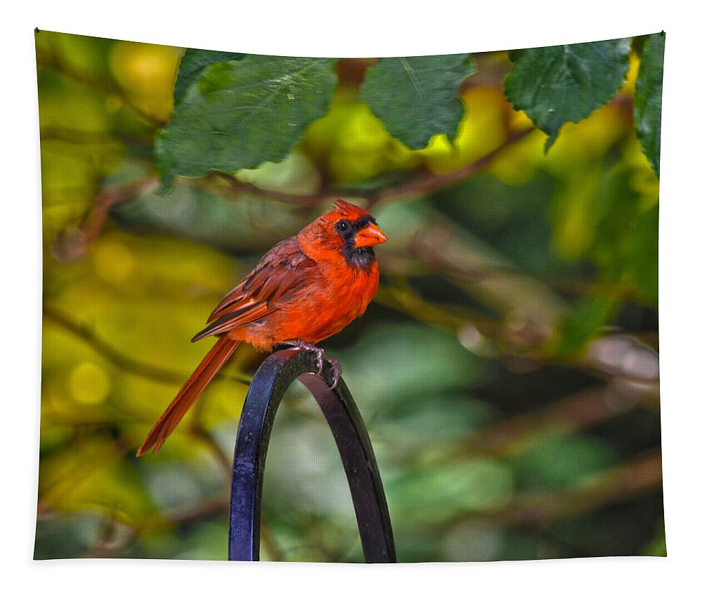 Cardinal Tapestry featuring the photograph Young Fall Cardinal by Sandi OReilly