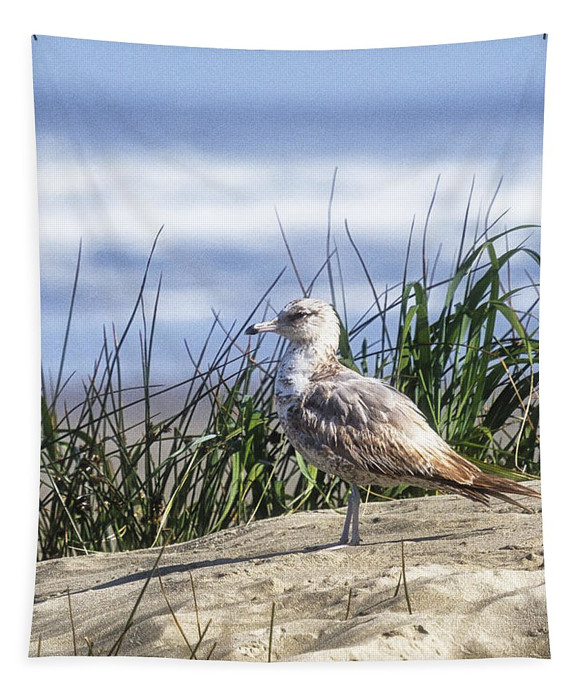 Seagull Tapestry featuring the photograph Young Seagull No. 2 by Belinda Greb