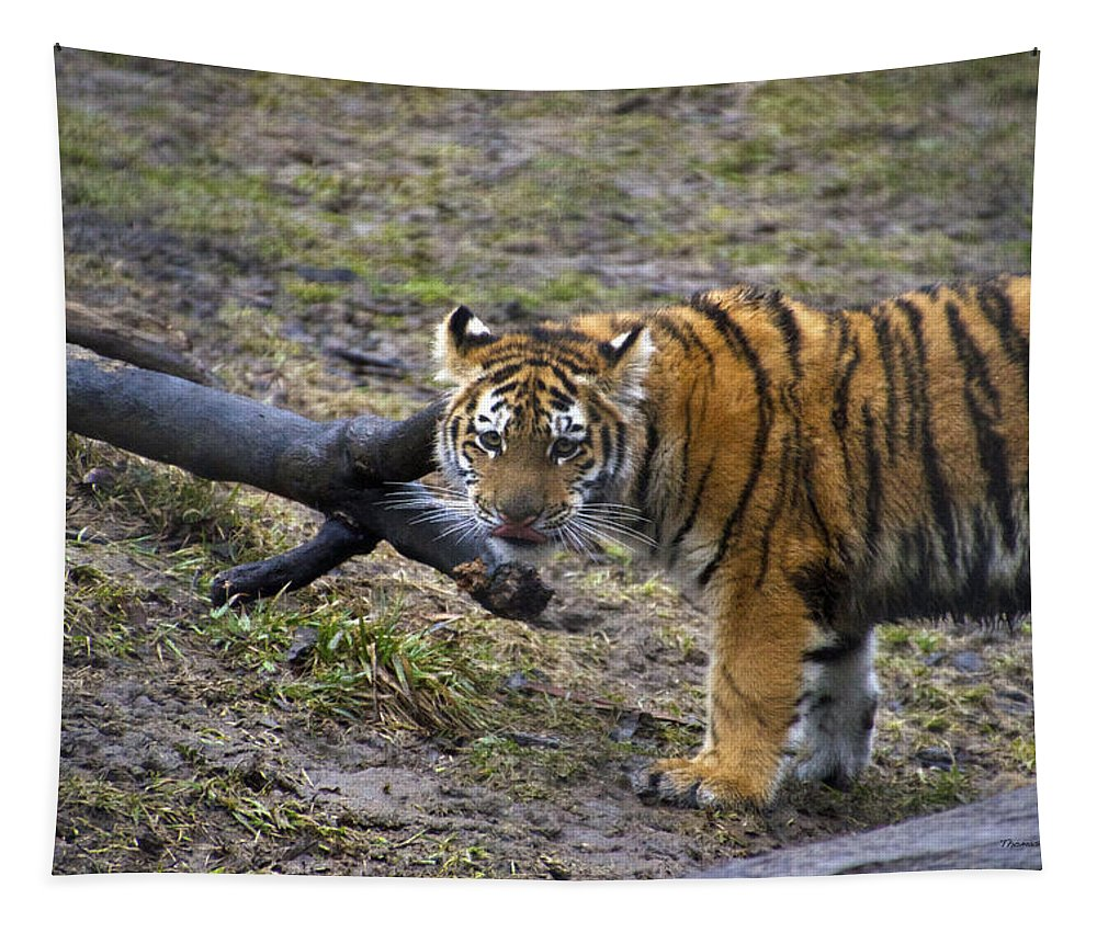 Animals Tapestry featuring the photograph Young Tiger by Thomas Woolworth