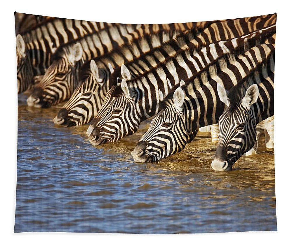 Wild Tapestry featuring the photograph Zebras drinking by Johan Swanepoel