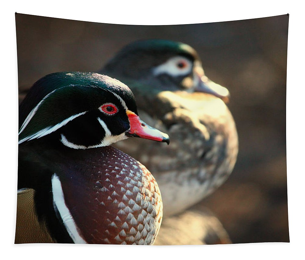 Ducks Tapestry featuring the photograph A Couple Of Wood Ducks by Karol Livote