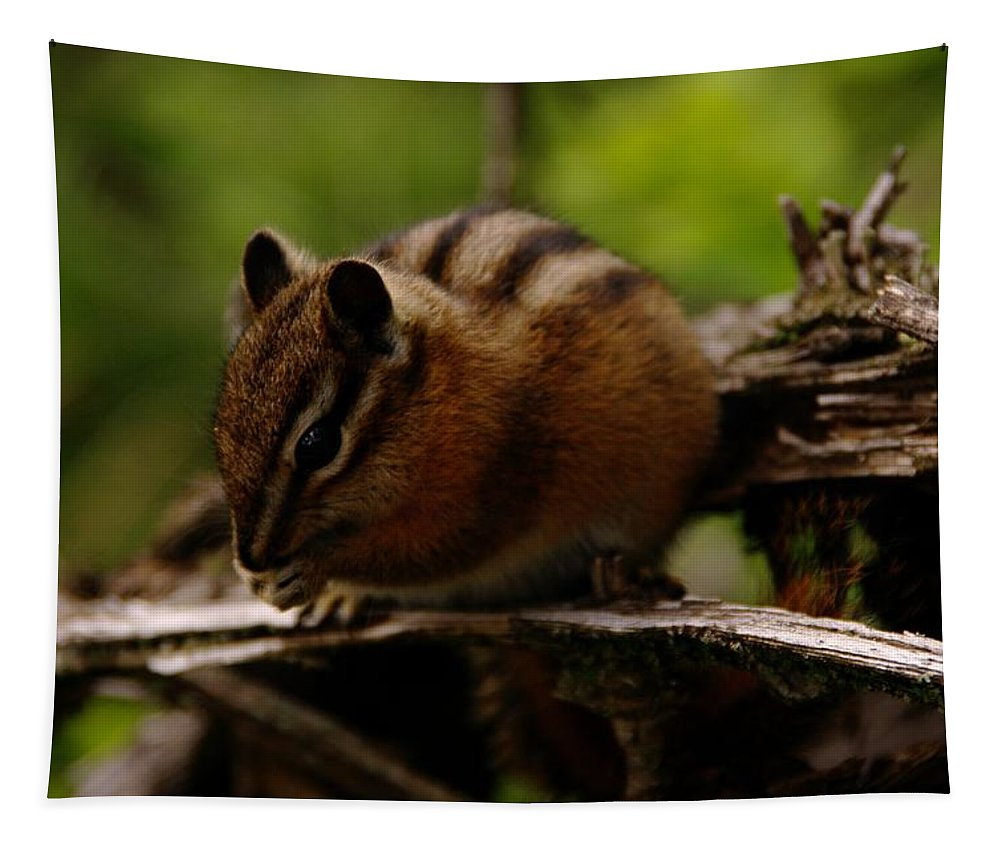 Animals Tapestry featuring the photograph A Little Chipmunk by Jeff Swan