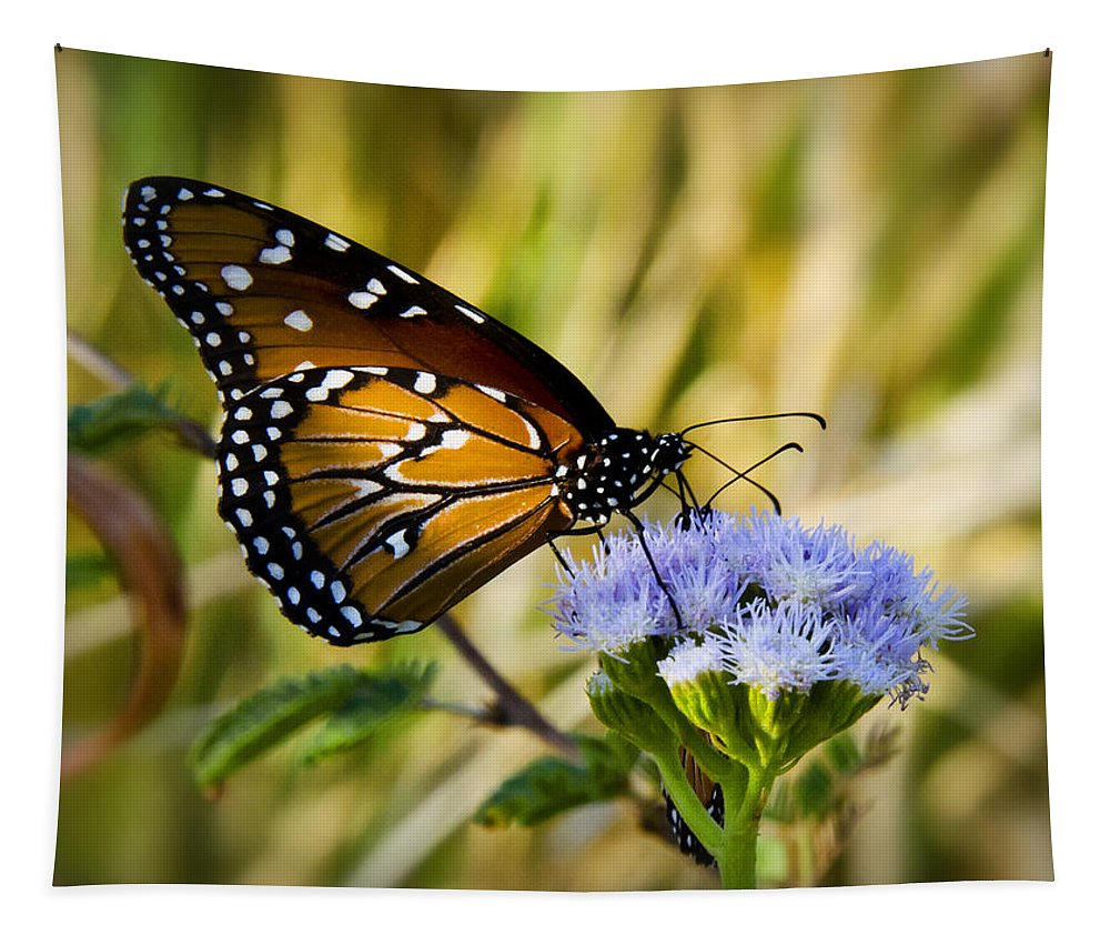 Queen Butterfly Tapestry featuring the photograph Behold The Queen by Saija Lehtonen