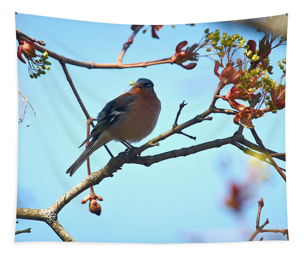 Isosuo Tapestry featuring the photograph Chaffinch by Jouko Lehto
