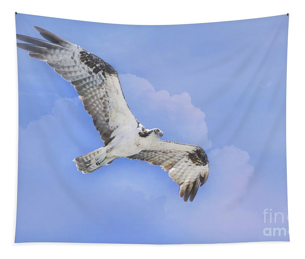 Osprey Tapestry featuring the photograph In The Clouds by Deborah Benoit